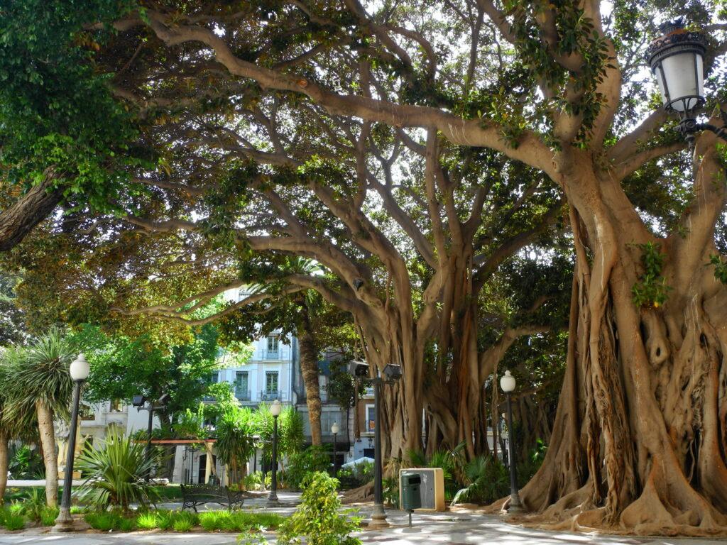 Alicante látnivalók: Plaza de Gabriel Miró
